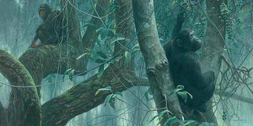 Robert z Bateman At Mahale – Chimpanzees