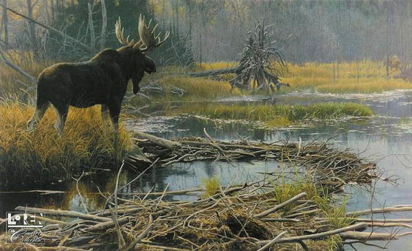 Robert z Bateman Autumn Overture – Moose