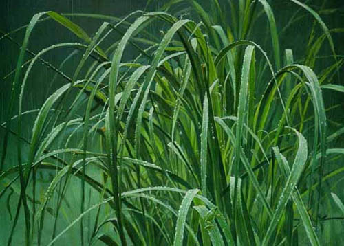 Robert z Bateman Beach Grass And Tree Frog
