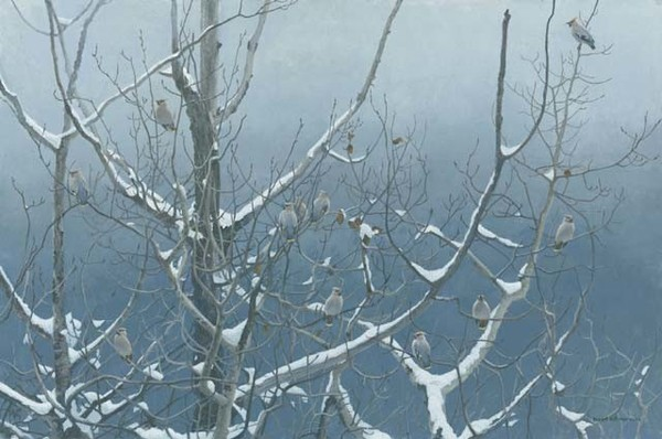 Robert z Bateman Bohemian Waxwings and Poplar