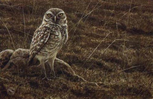 Robert z Bateman Burrowing Owl