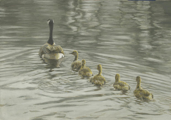 Robert z Bateman Canada Goose and Goslings