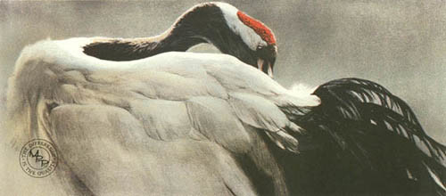 Robert z Bateman Ceremonial Pose Red Crowned Crane