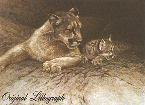 Robert z Bateman Cougar and Kit