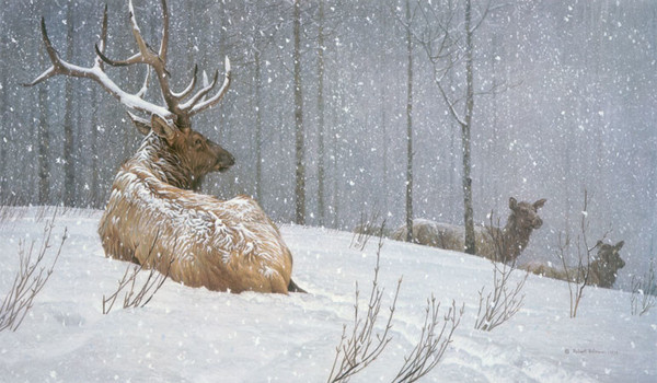 Robert z Bateman Evening Snowfall – American Elk