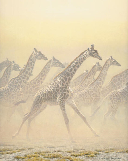 Robert z Bateman Galloping Herd – Giraffes