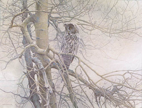 Robert z Bateman Ghost Of The North – Great Gray Owl