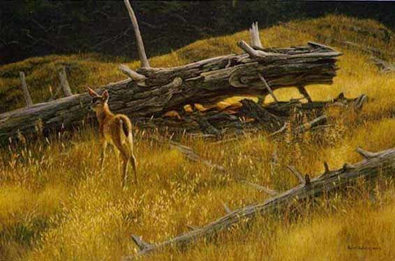 Robert z Bateman Golden Light Blacktailed Fawn