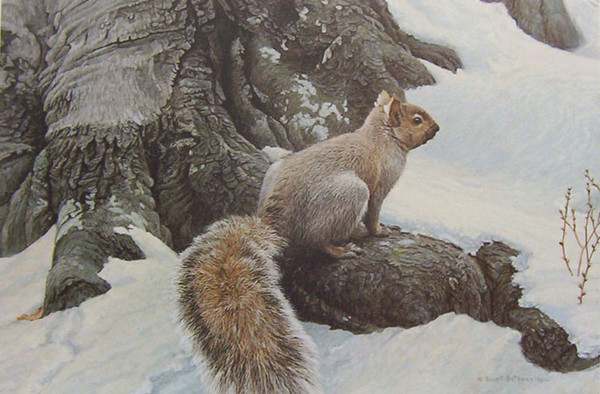 Robert z Bateman Gray Squirrel