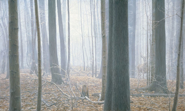Robert z Bateman Hardwood Forest – White-Tail Deer