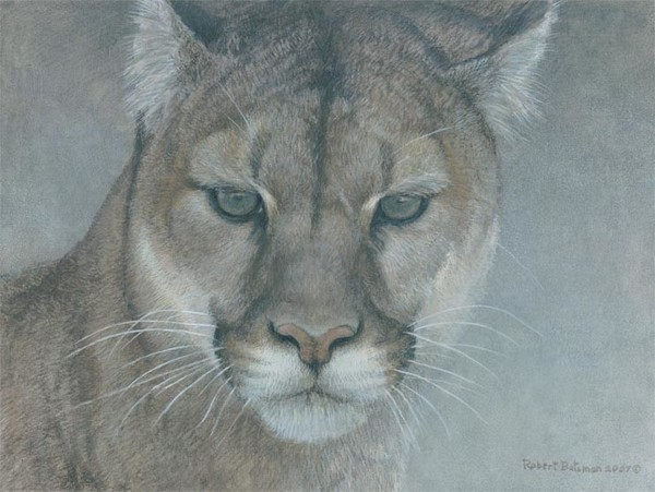 Robert z Bateman Intent Cougar