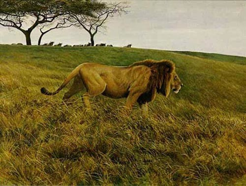 Robert z Bateman Lion And Wildebeest