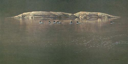 Robert z Bateman Loon Gathering At Big East