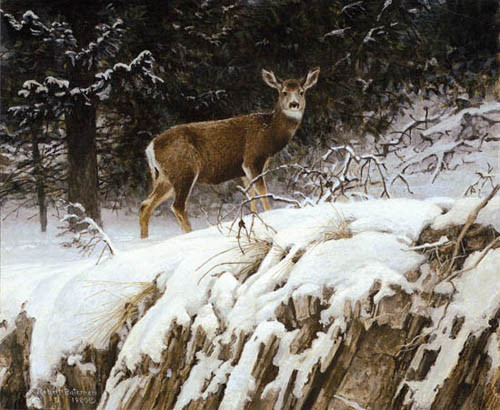 Robert z Bateman Mule Deer In Snow