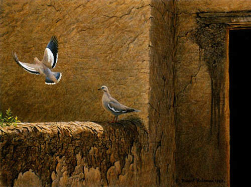 Robert z Bateman Old Adobe White Winged Doves