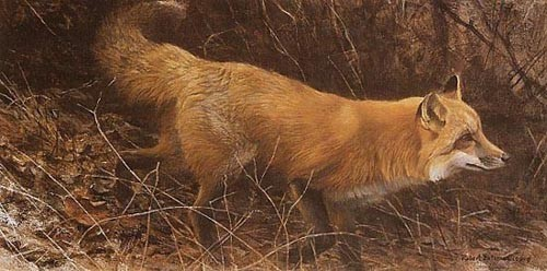Robert z Bateman On The Move – Red Fox