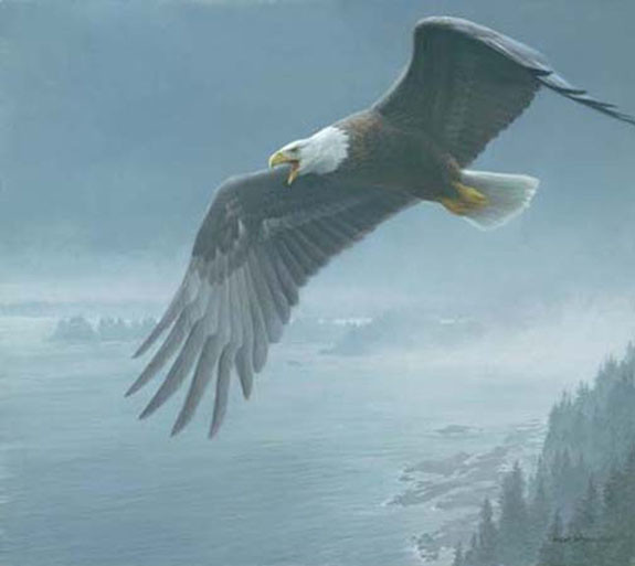 Robert z Bateman On The Wing – Bald Eagle