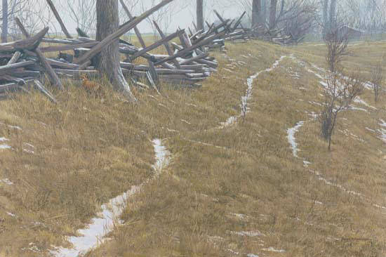 Robert z Bateman Pasture Trails – Red Fox