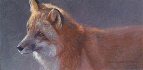 Robert z Bateman Questing – Red Fox