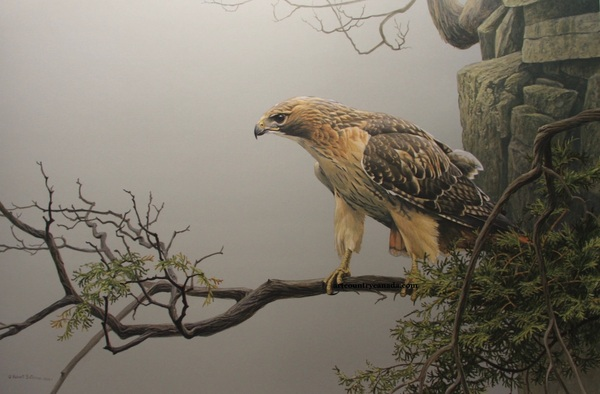 Robert z Bateman Red Tailed Hawk on the Cliff