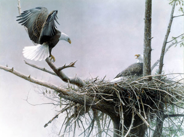 Robert z Bateman Return Bald Eagle Pair