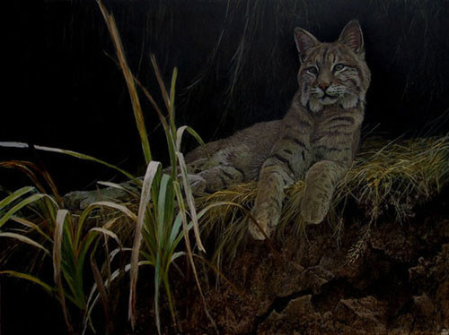 Robert z Bateman Riverbank Retreat – Bobcat