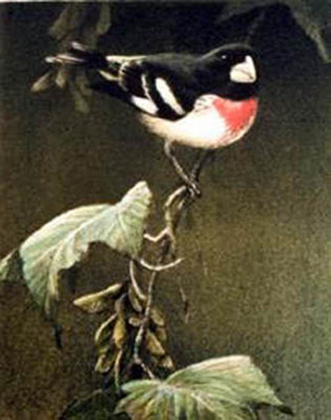 Robert z Bateman Rose Breasted Grosbeak