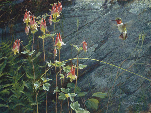 Robert z Bateman Ruby Throat and Columbine