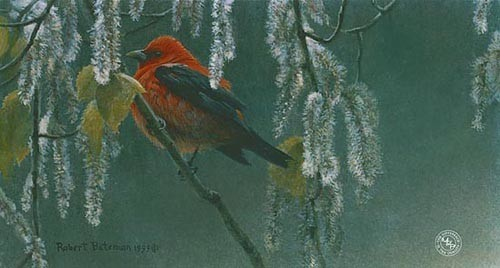 Robert z Bateman Scarlet Tanager and Alder Blossoms