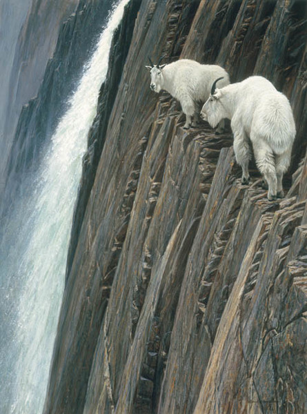 Robert z Bateman Sheer Drop – Mountain Goats