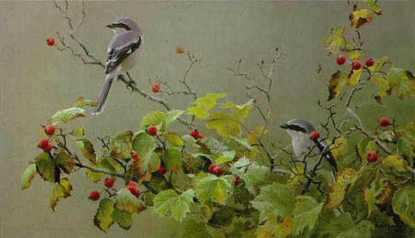Robert z Bateman Shrike Pair and Hawthorn