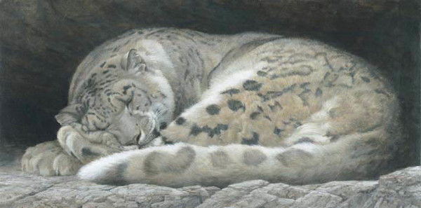Robert z Bateman Sleeping Snow Leopard