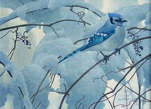 Robert z Bateman Snowy Morning – Blue Jay