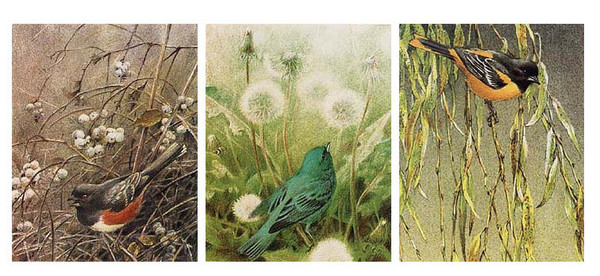 Robert z Bateman Songbird Set
