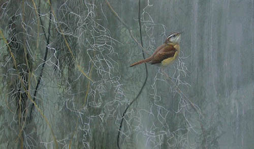 Robert z Bateman Song Of The South – Carolina Wren