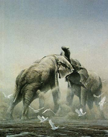Robert z Bateman Sparring Elephants