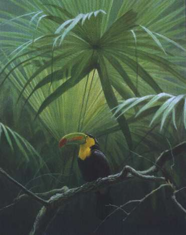 Robert z Bateman Under The Canopy Toucan