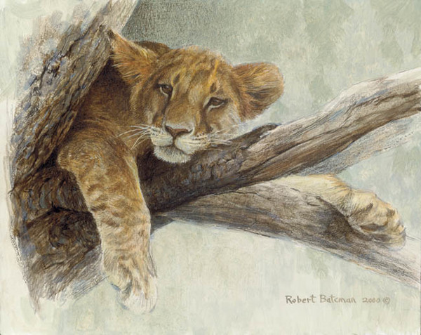 Robert z Bateman Up A Tree – Lion Cub