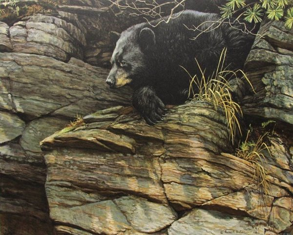 Robert z Bateman Watchful Repose Black Bear