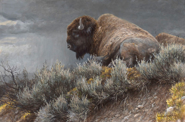 Robert z Bateman Weather Watch – Bison