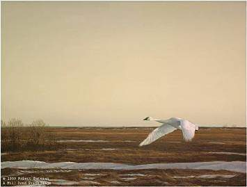 Robert z Bateman Whistling Swan Lake Erie
