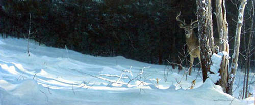 Robert z Bateman Whitetail In Winter