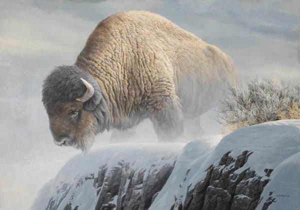 Robert z Bateman Winter Bison