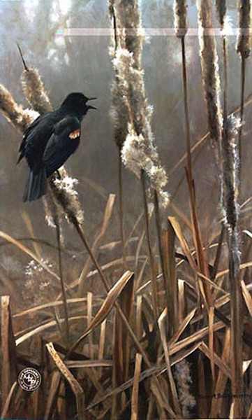 Robert z Bateman Winter Cattails Redwinged Blackbird