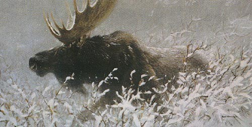 Robert z Bateman Winter Run Bull Moose