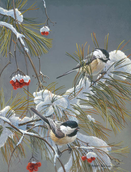 Robert z Bateman Winter Song – Chickadees