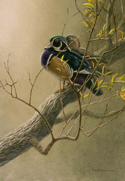 Robert z Bateman Woodduck Pair in Willow