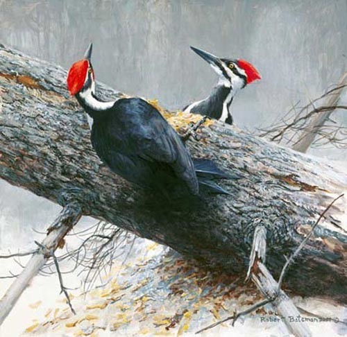 Robert z Bateman Woodworkers-Pileated Woodpeckers