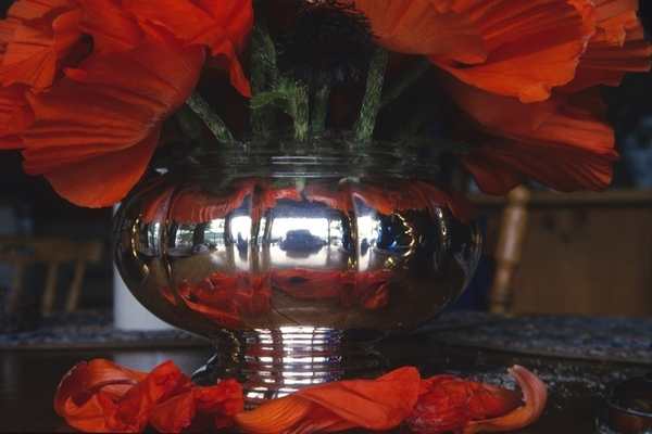 Birgit Freybe z Bateman Silver Bowl with Poppies	(at our house, Salt Spring Is., BC, CA)