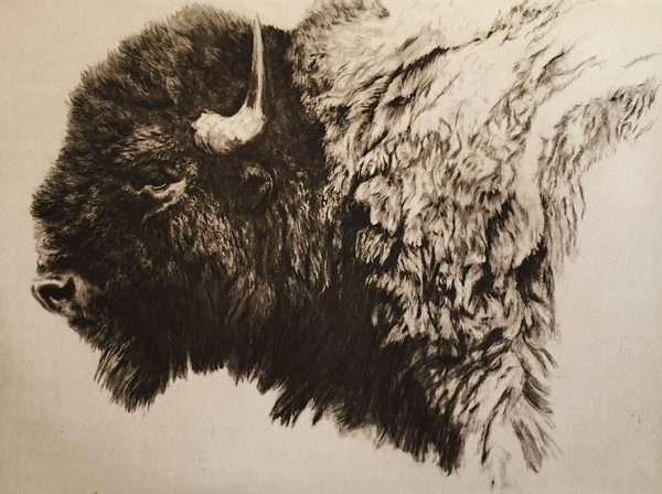 Robert z Bateman Bison Head